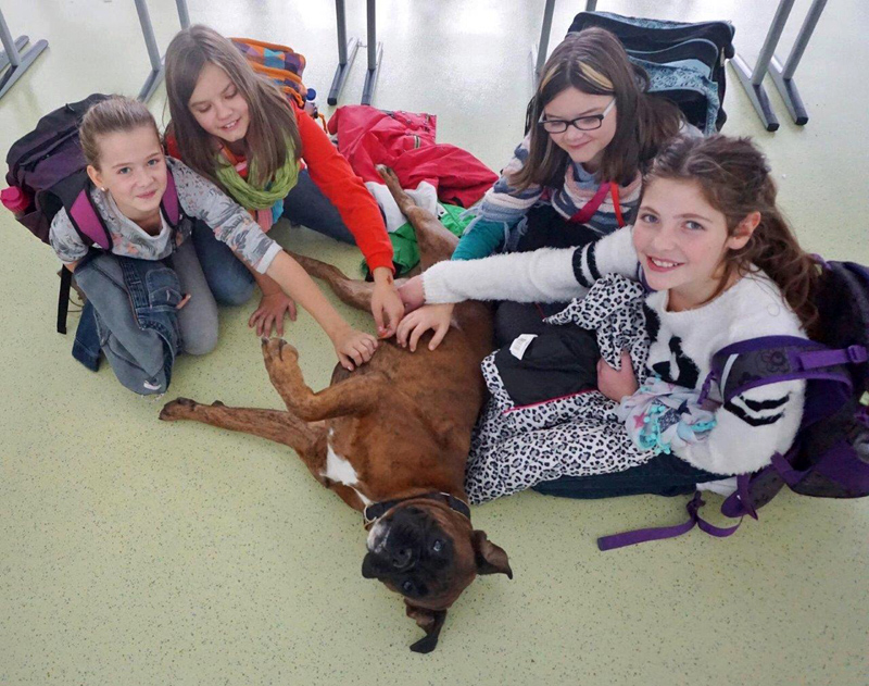 Schulhund Emil