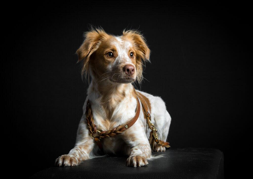 Schulhund Coco